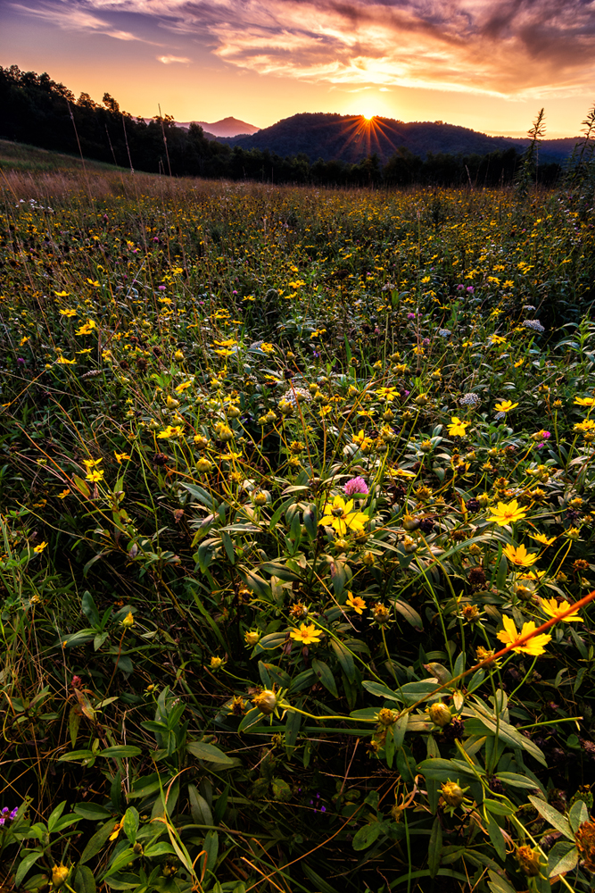 """Wildflowers, Moses Cone Park Milepost 294"" by Victor Ellison Fine Art Photography"