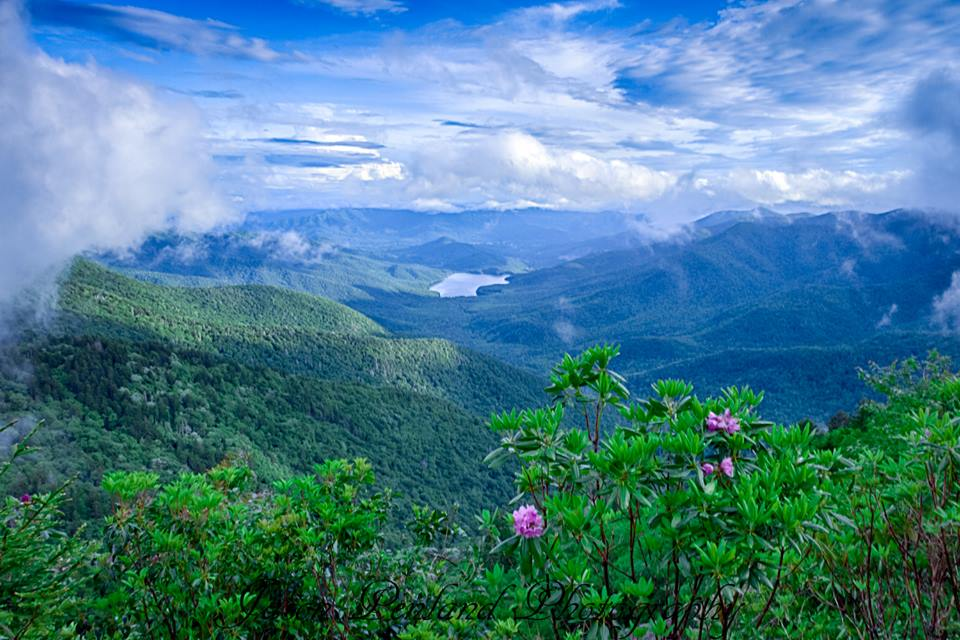"""Parkway View of the Asheville Watershed"" by Jason Penland"