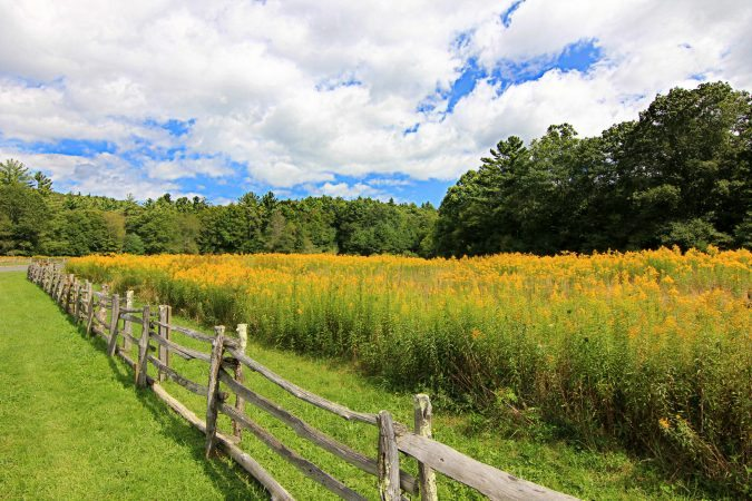 """Goldenrod at Entrance To Linville Falls Milepost 316"" by Sue Tarkenton"