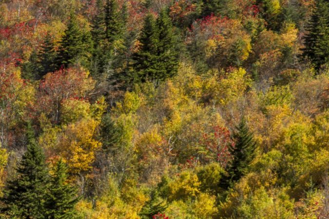 """""""Hikers at Black Balsam, Milepost 420"""" by Jennifer Mesk Photography"""