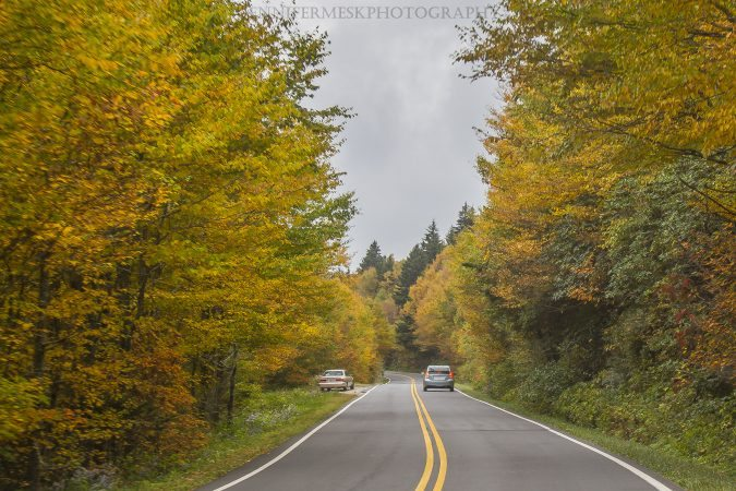 """Fall Color near Mt. Mitchell"" by Jennifer Mesk Photography"