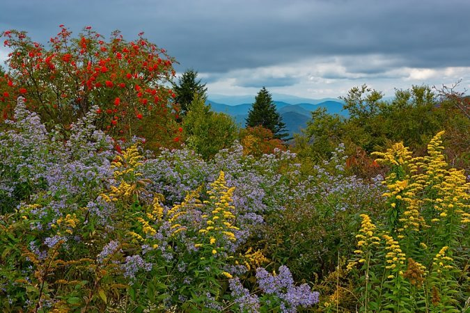 """Mountain Ash & Wildflowers"" by Gwen Cross Photography"