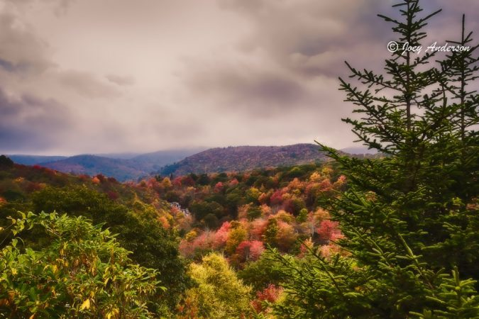 """Near Peak Color At Graveyard Fields Milepost 418"" by Joey Anderson"
