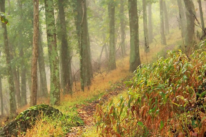 """""""Parkway Hiking Trail at Milepost 160"""" by Mildred Meade"""