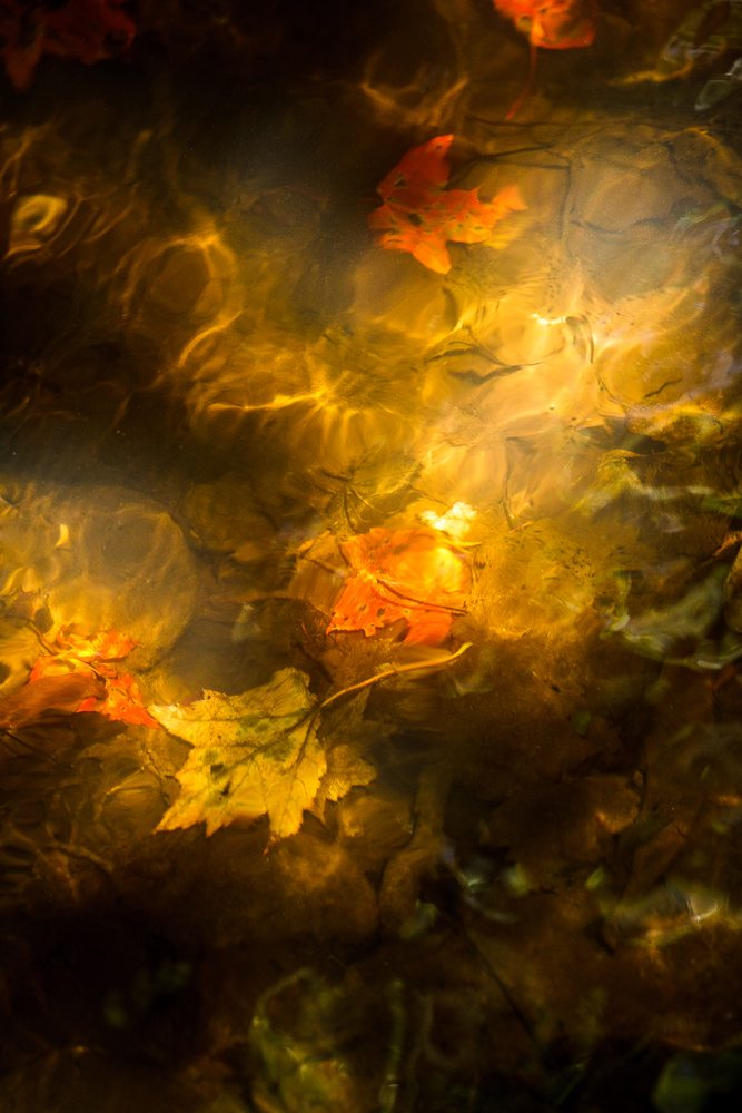 """Leaves Under Water"" by Victor Ellison Fine Art Photography"