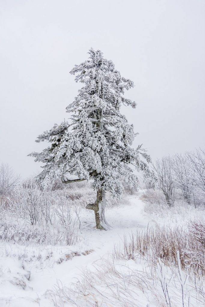 """Black Balsam Knob, White with Snow"" by Daniel Plotts"