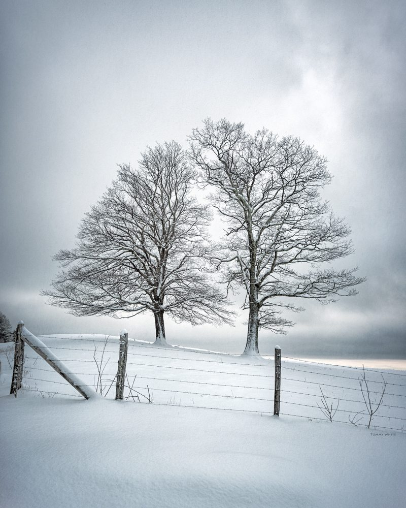 """Winter Companions"" by Tommy White Photography"