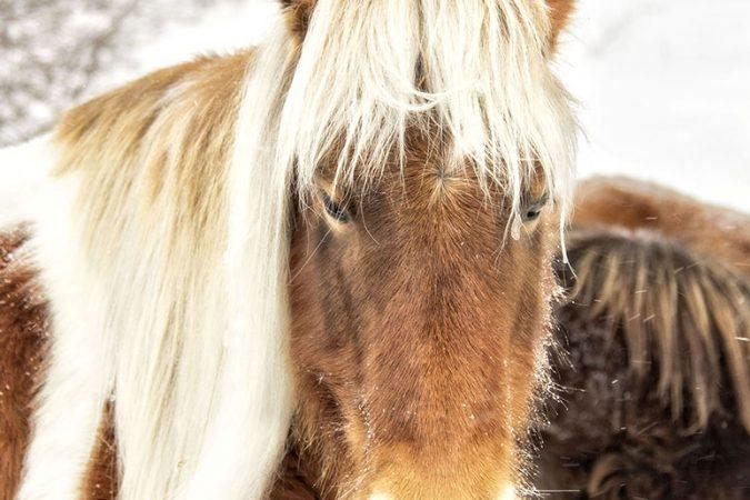 """""""Grayson Highlands Pony"""" by Edwards Art & Photography"""