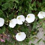 Gallery of Parkway Wildflowers Blooming in Late September