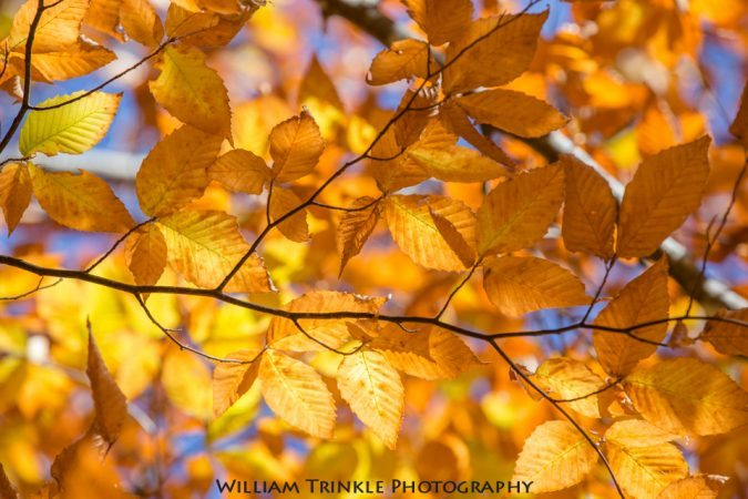 """""""Late Season Color at Graveyard Fields, Milepost 418.8"""" by William Trinkle Photography"""
