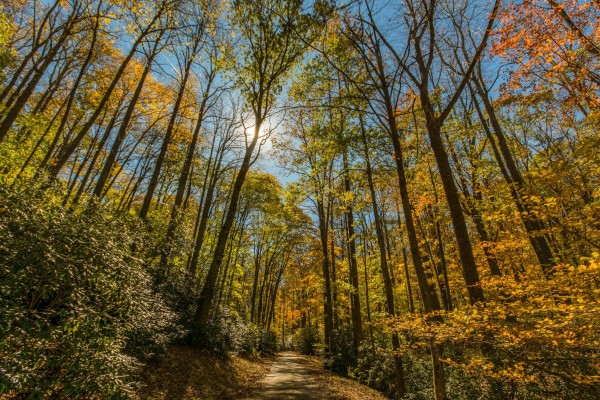 Fall Woods at Julian Price Campground