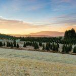 Skylark Christmas Trees, Milepost 25