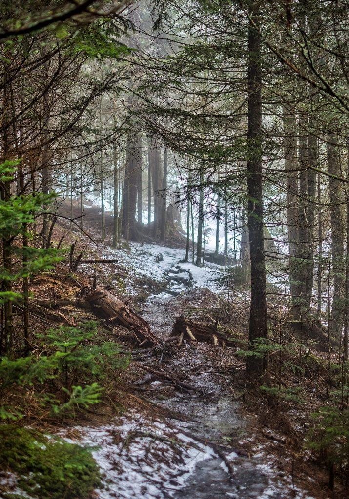 """Snowy Trail at Mt. Hardy"" by Daniel Plotts"