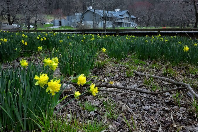 """Yellow Blooms at Peaks of Otter, Milepost 86"" by Steve Hurt"
