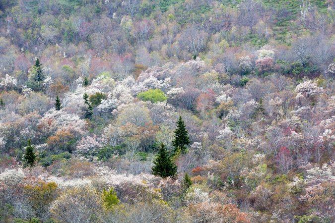 Fuhr-Graveyard-Fields