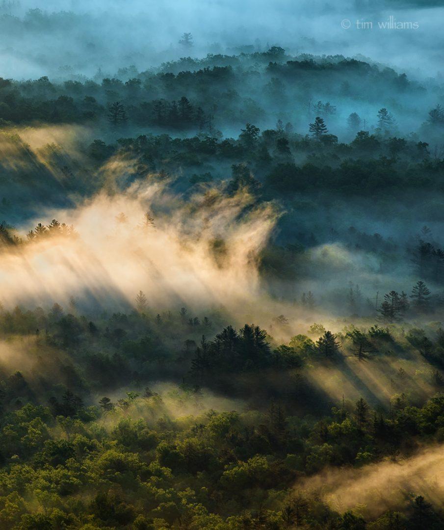 fog-brpd
