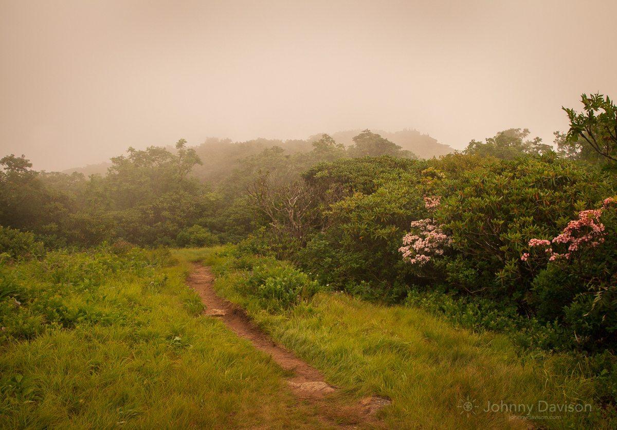 Fog On Craggy Pinnacle By Johnny Davidson