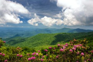 """""""Rhododendron at Craggy Gardens, Milepost 364.6"""" by Pavel Petrushenko"""