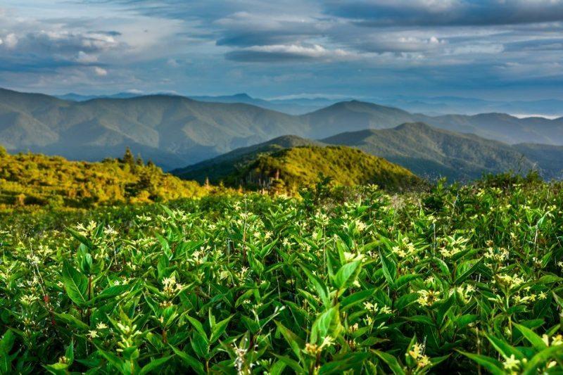 """""""Art Loeb Trail near Tennent Mountain"""" by Daniel Plotts"""