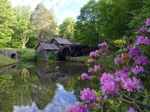 """Spring Rhododendron at Mabry Mill, Milepost 176.1"" by Bernardo Egli"