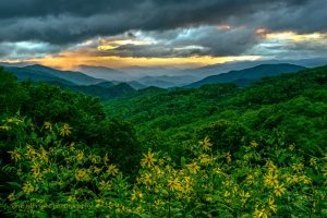 """Wildflowers at Thunder Struck Ridge Overlook, Milepost 454.4"" by Eric Albright"