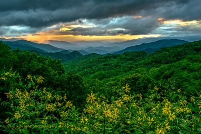 """Wildflowers at Thunder Struck Ridge Overlook, Milepost 454.4"" by Eric Albright"