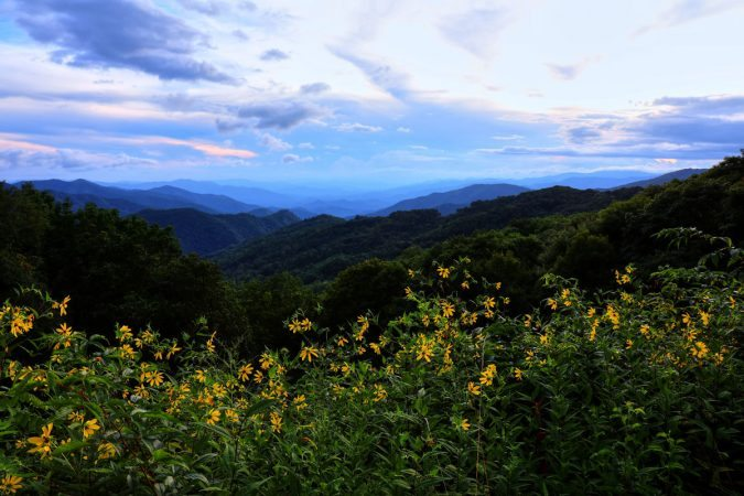 """Yellow Flowers at Thunder Struck Ridge, Milepost 454.4"" by Carol R Montoya"
