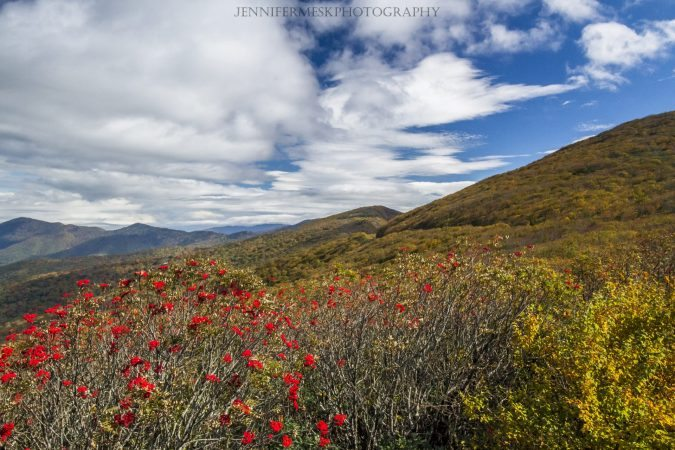 """Mountain Ash in Craggy Gardens, Milepost 364.6"" by Jennifer Mesk Photography"