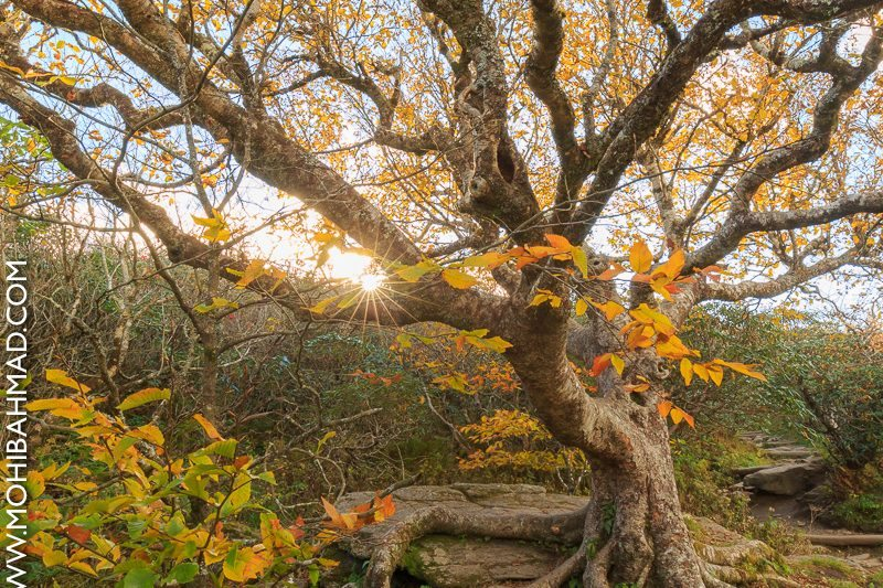 """Fall Color on the Craggy Pinnacle Trail, Milepost 364"" by Mohib Ahmad"