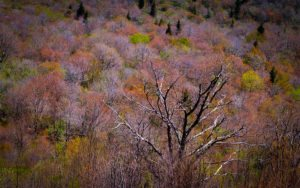 """""""First Spring Color at Graveyard Fields, Milepost 418"""" by Emily Holshouser"""