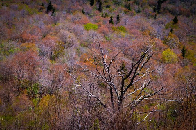 """First Spring Color at Graveyard Fields, Milepost 418"" by Emily Holshouser"