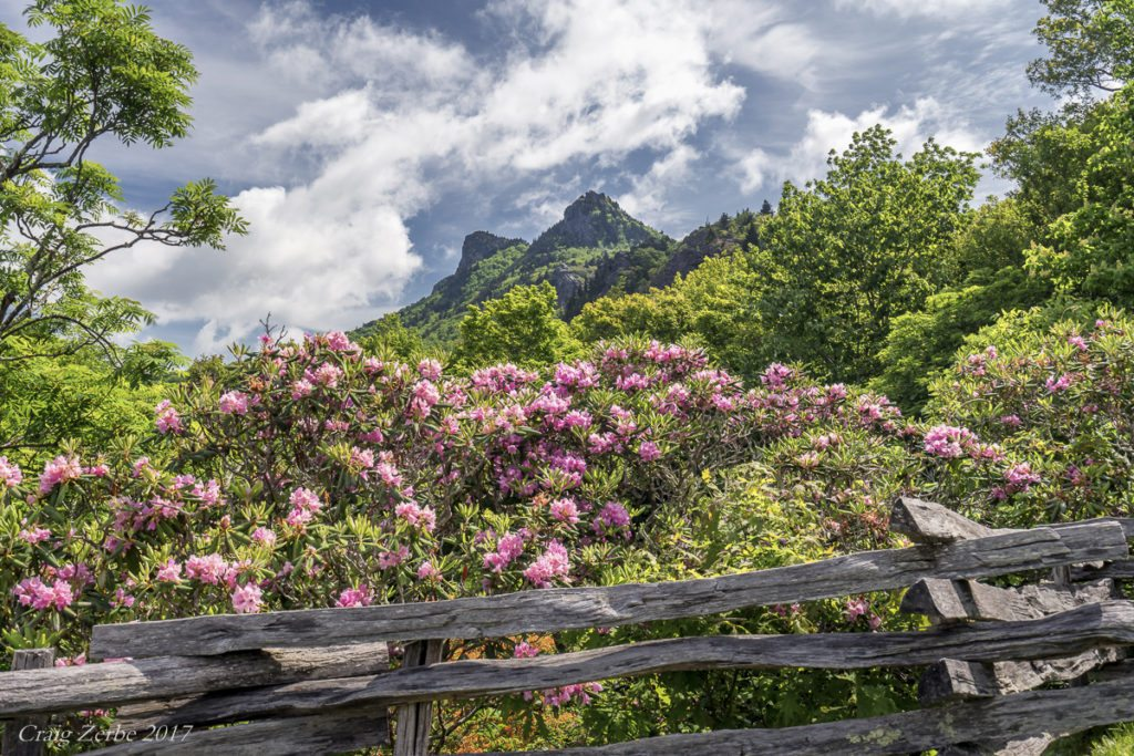 """""""Rhododendron at Grandfather Mountain"""" by Craig Zerbe"""