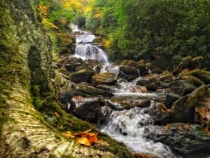 """Lower Sam Branch Falls, Milepost 423"" by Todd Roy"
