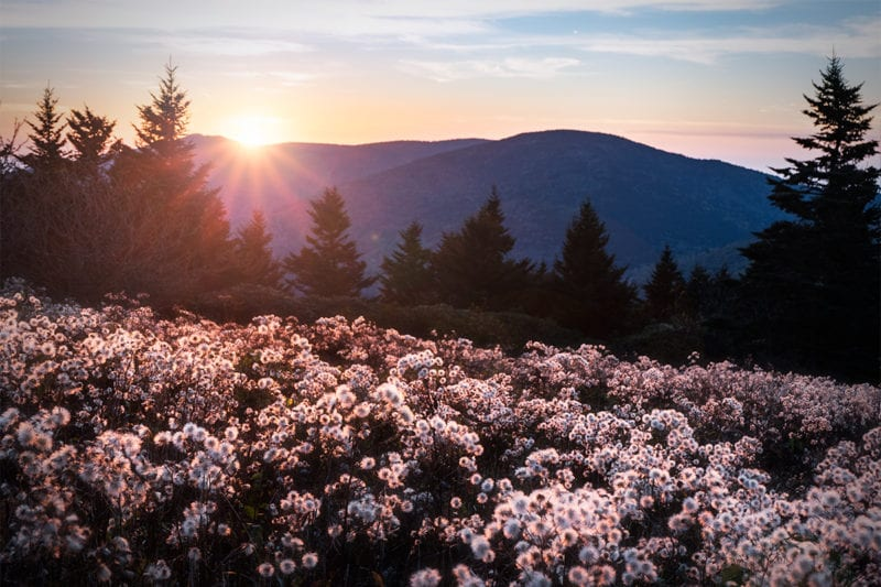 """Wildflowers at Roan Highlands"" by Dawnfire Photography"